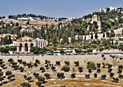 gethsemane-mt-of-olives