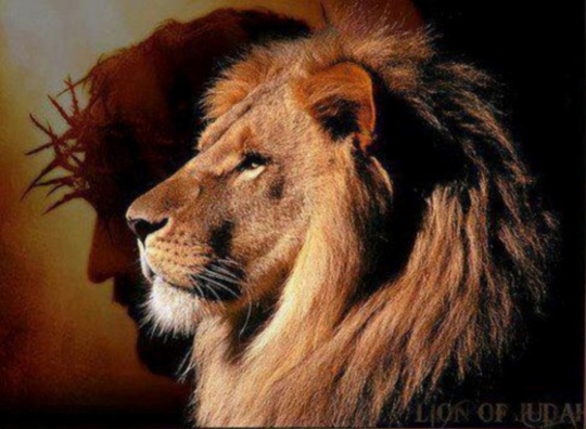 lion-face3